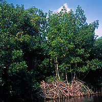 Vista de los manglares en Parque Nacional Laguna de Tacarigua. Edo. Miranda, Venezuela. Tacarigua, 21 de Mayo del 2012. Jimmy Villalta