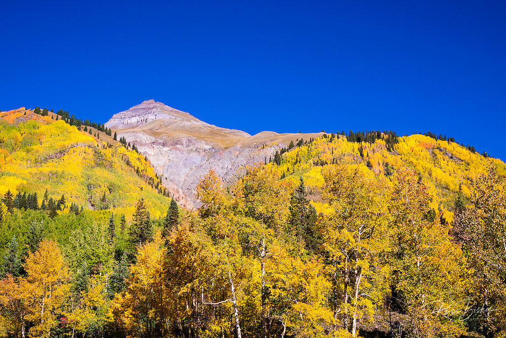 Fall aspens on Red Mountain Pass, Uncompahgre National Forest, Colorado USA