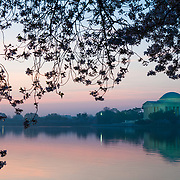 The Jefferson Memorial is illuminated with its lights just before sunrise with the cherry blossom branches with flowers framing the shot. The Yoshino Cherry Blossom trees lining the Tidal Basin in Washington DC bloom each early spring. Some of the original trees from the original planting 100 years ago (in 2012) are still alive and flowering. Because of heatwave conditions extending across much of the North American continent and an unusually warm winter in the Washington DC region, the 2012 peak bloom came earlier than usual.