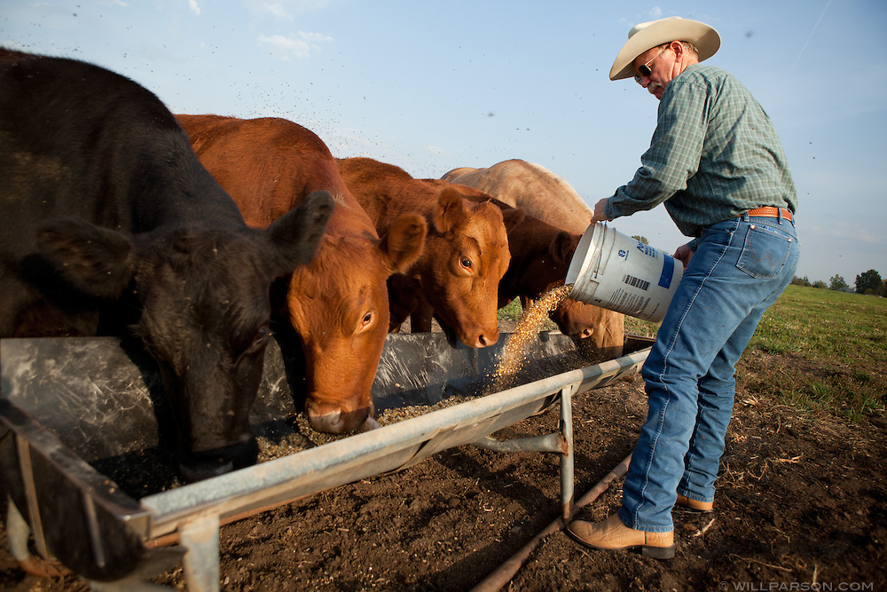 J Parson feeds his cousin's cattle on his farm in Girard, Kansas.