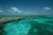 Coral reef<br /> Lighthouse Reef Atoll<br /> Belize<br /> Central America