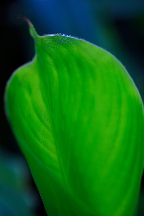 Curitiba_PR, Brasil...Jardim Botanico da cidade de Curitiba, Parana. Na foto detalhe de uma planta...The Botanic Garden in Curitiba, Parana. In this photo a plant detail...Foto: BRUNO MAGALHAES / NITRO