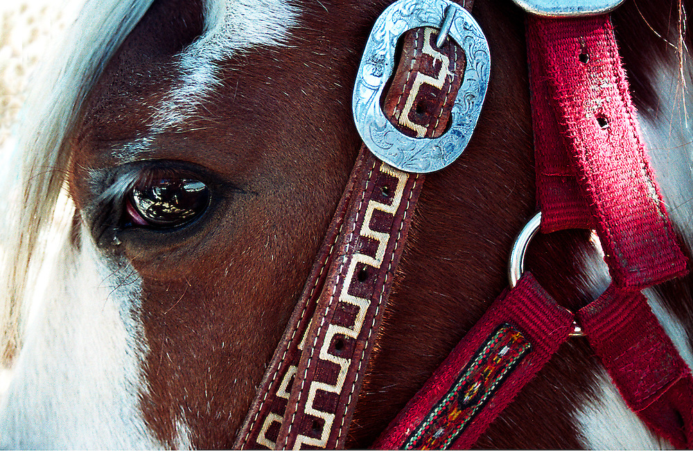Red Bridle on Horse