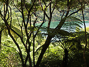 Tawa Bay, Queen Charlotte Track, South Island, New Zealand