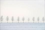 Nederland, Buurmalsen, 16-1-2013Winterlanschap op het platteland met sneeuw, mist en grijze lucht.Foto: Flip Franssen/Hollandse Hoogte