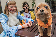 Lucy, a terrier Chiwowa, with an injured Cinderella and friend - A charity Halloween Dog Walk and Fancy Dress Show organised by All Dogs Matter at the Spaniards Inn, Hampstead. London 29 Oct 2017.