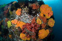 Cup Corals and Soft Corals
