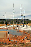 Opalescent Pool is a shallow thermal pool located in Black Sand Basin in Yellowstone National Park, Wyoming