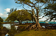 The Hilo Bayfront Beach Park is surrounded in lush vegetation as the Kilauea Volcano lower east rift zone continues the eruption on Wednesday, June 6, 2018, in Pahoa, Hawaii.