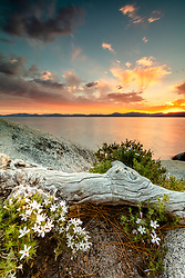 """Sunset at Lake Tahoe 45"" - Photograph of an orange sunset above Lake Tahoe and tiny white wildflowers growing among the boulders at Sand Harbor."