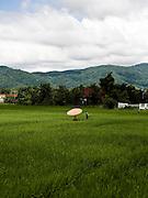 Rice fields North of Chiang Rai