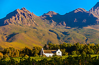 Dornier Wine Estate, near Stellenbosch, Cape Winelands, near Cape Town, South Africa.