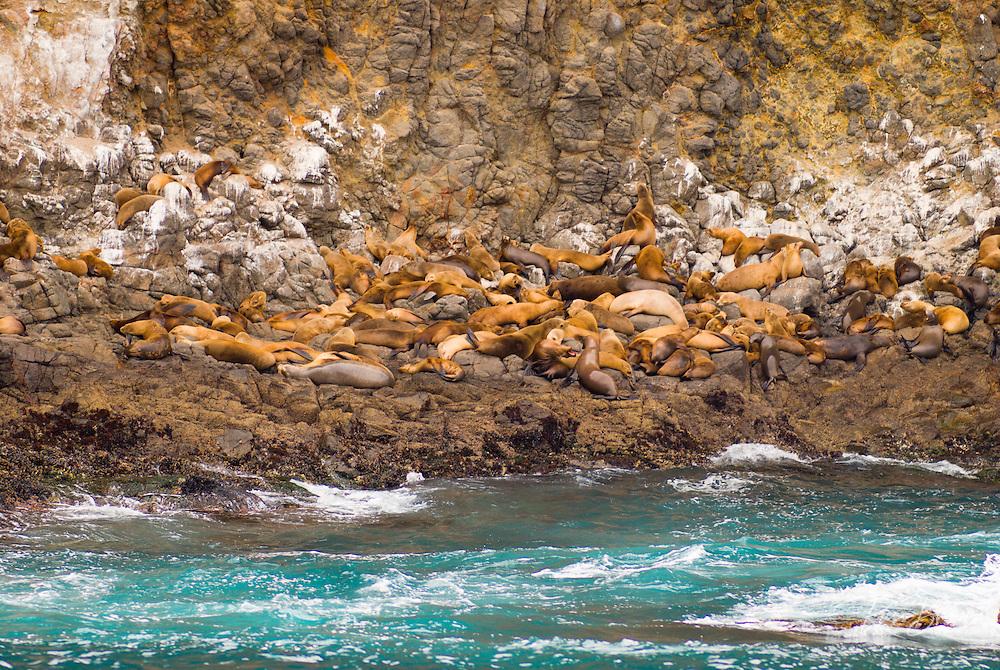 Sea lions at east Anacapa Island, Channel Islands National Park, California