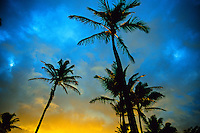 Palm trees at sunrise at Radisson Kaua'i Beach Resort, island of Kaua'i, Hawaii USA