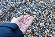 Fossilized sea urchin, Thames River foreshore, London.