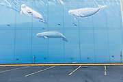 A painted wall mural of Beluga whales in downtown Anchorage, Alaska.