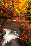 Fascinating autumn forest scene with a river and foliage