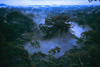 Lowland rain forest with morning mist in Gunung Palung National Park, Borneo, taken from high in the canopy.