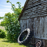 Old tractor tyres leaning against an old wooden shed