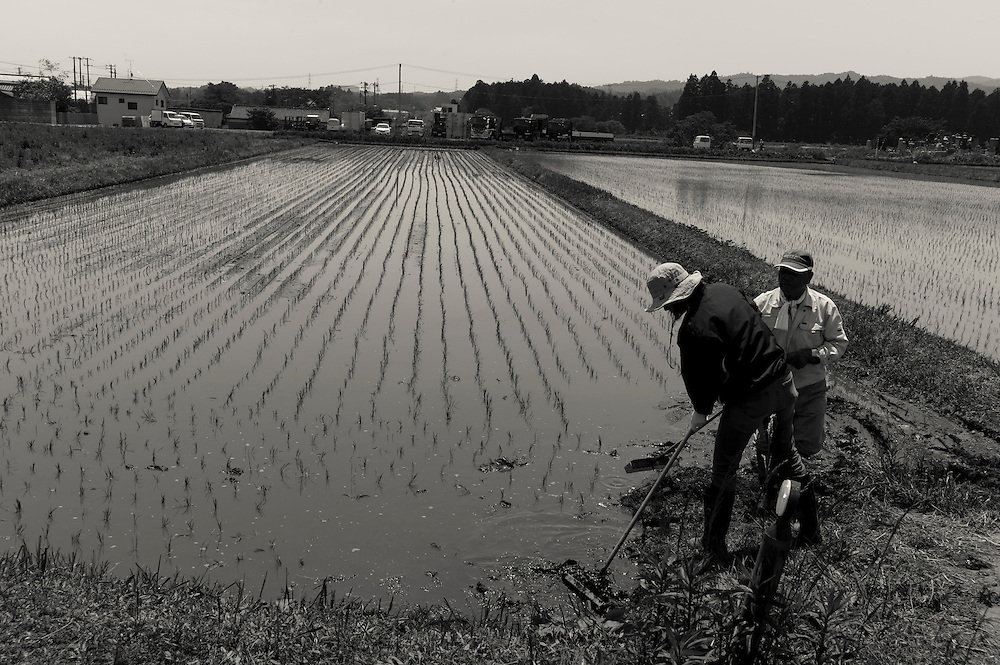 First planting of Rice since 3/11/2011