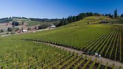 Saffron Fields 2017 harvest, Yamhill-Carlton AVA, Willamette Valley, Oregon