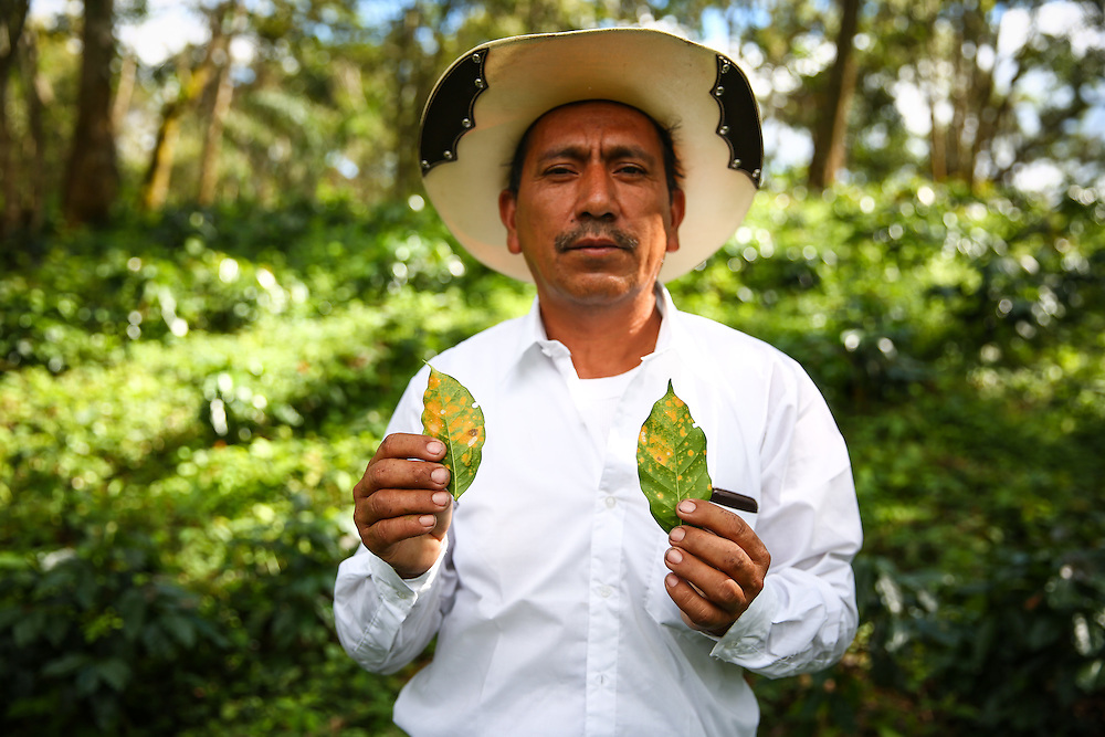Farmer Rolando Javier Lopez Angel photographed among new coffee tress on his coffee farm in the Jaltenango region of Chiapas, Mexico. (Joshua Trujillo, Starbucks)<br /> <br /> ***model released***