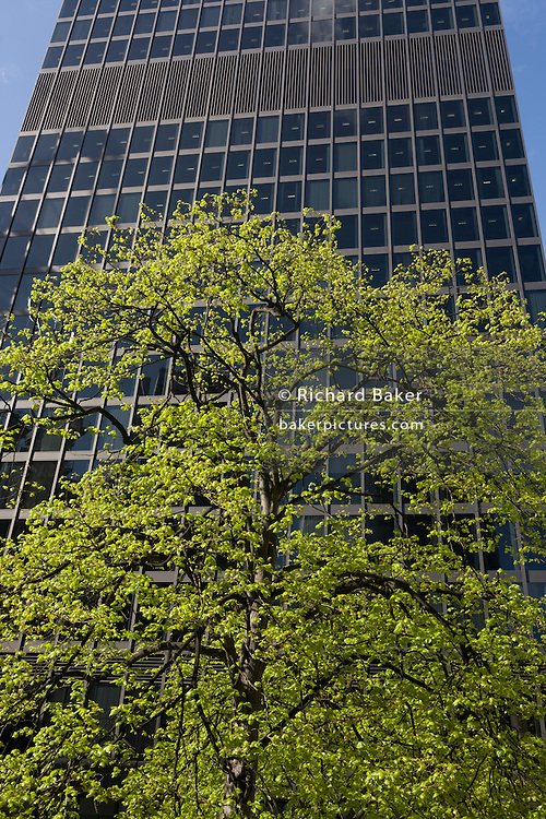 Healthy green leaves sprout from a tree below a tall office skyscraper, a scene of economic prosperity, growth and recovery.