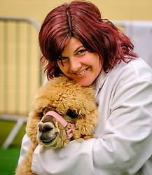 Lanark Scotland 15th April 2017:  The Second Scottish Alpaca Championship, organised by the Scottish Alpaca Group, took place on Saturday 15th April 2017 at Lanark Auction Market. The event had a record entry of 140 alpacas being shown and judged.<br /> An Alpaca in the show ring with it's handler.<br /> <br /> <br /> (c) Andrew Wilson   Edinburgh Elite media