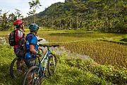 Cyclists beside rice paddy field, Bali, Indonesia.