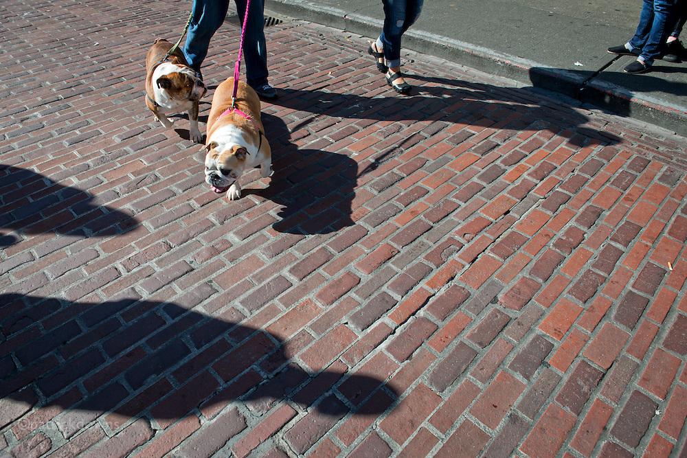 Bulldogs, Pike Place Market