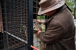 ROMANIA ONESTI 28OCT12 - The zoo's veterinary pets a Eurasian wolf in captivity at the Onesti zoo.  ..The zoo has been shut down due to non-adherence with EU regulations on the welfare of animals.......jre/Photo by Jiri Rezac / WSPA......© Jiri Rezac 2012