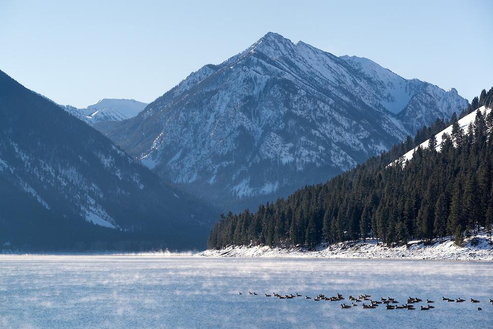 Canada geese on Oregon's  Wallowa Lake in winter.