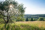 Naturschutzgebiet, Hoherodskopf, Vogelsberg, Hessen, Deutschland | nature reserve, Hoherodskopf, Vogelsberg, Hesse, Germany
