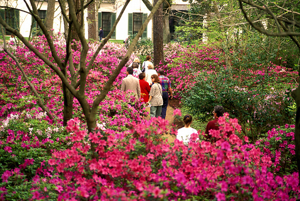 Stock photo of visitors to Bayou Bend enjoy the azalea trails.