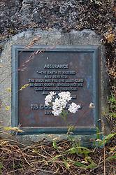 Yarrow (Achillea millefolium) and Tib Dodd Tombstone, Yellow Island, San Juan Islands, Washington, US