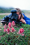 Alaska. Photographer Robin Brandt focuses on a macro image of the tundra flowers in Denali National park.