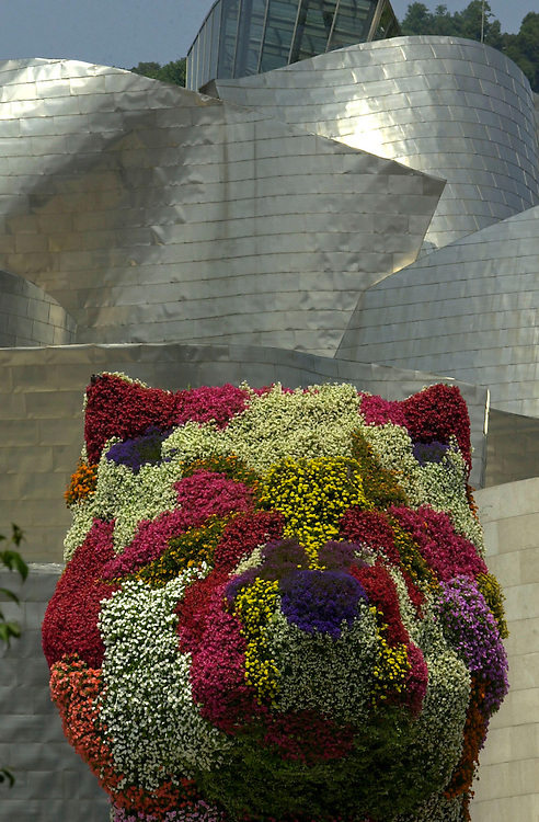 Jeff Koon's Puppy blossoms outside the the Guggenheim Museum, Bilbao, Spain.