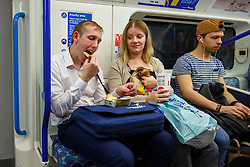© Licensed to London News Pictures. 20/08/2016. London, UK. Tube passengers consume fast food products whilst travelling on the night tube service of Victoria line in London for the first time on 20 August 2016. Transport for London started a 24-hour Tube service on Victoria and Central lines as demand has soared over recent years, with passenger numbers on Friday and Saturday nights up by around 70 per cent since 2000. The plan was announced in November 2013 and intended to begin in September 2015, but strikes over pay delayed the start by nearly another year. Photo credit: Tolga Akmen/LNP