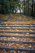 Fallen leaves on stone stairs