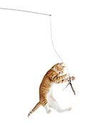 Da Bird is the perfect toy for cats, allowing them to exercise their hunting instincts while entertaining their owners.