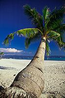 Single palm tree on white sand beach, Boracay island, Philippines.