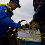 A group of fishermen from Togura, recover nets at sea near the small village of Minami Sanriku in Miyagi prefecture. Togura, a small fishing village in Minami Sanriku, was vastly destroyed by the 2011 tsunami that hit the northeast coast of Japan. Thousands died and hundreds of families lost their houses, business and boats. The recovering community works now in a cooperative system where the few remaining boats spared by the tsunami are shared by all.