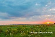 63893-03715 Sunrise and prairie Prairie Ridge State Natural Area Marion Co. IL