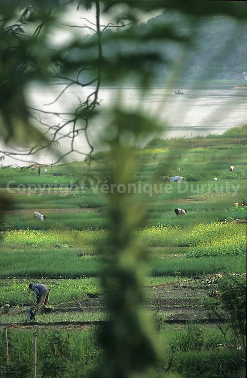 FARMERS WORKING ON THE FIELDS NEAR BRAZZAVILLE, CONGO