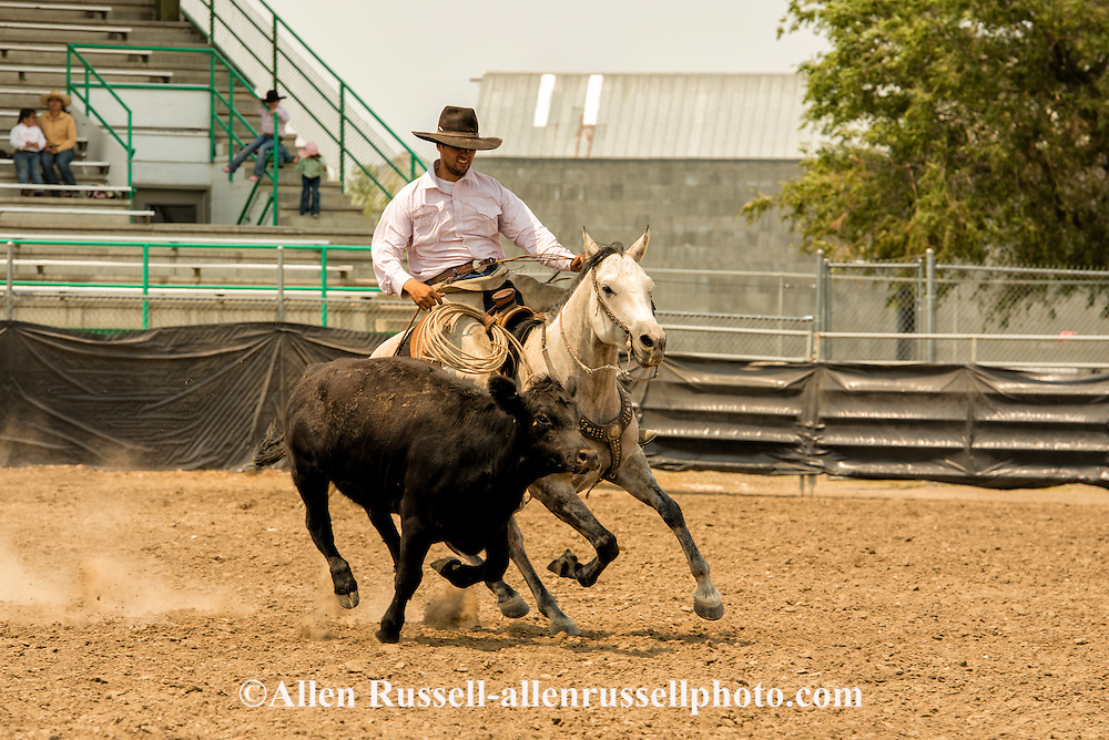 Will James Roundup, Ranch Rodeo, Working Ranch Horse, Hardin, Montana, Tanner Bell