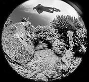 Jordan, Aqaba , Scuba Diving , Moray Eel.