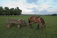 Horse feeding near lake Belau in Moldova