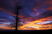 Lone pine snag at sunrise, East Rim viewpoint, North Rim of Grand Canyon, Grand Canyon National Park, Arizona..Subject photograph(s) are copyright Edward McCain. All rights are reserved except those specifically granted by Edward McCain in writing prior to publication...McCain Photography.211 S 4th Avenue.Tucson, AZ 85701-2103.(520) 623-1998.mobile: (520) 990-0999.fax: (520) 623-1190.http://www.mccainphoto.com.edward@mccainphoto.com