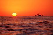 Cabo San Lucas, Baja California, Mexico<br />