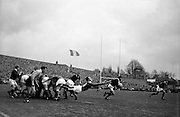 Irish scrum half J T M Quirke gets the ball away from a set scrum, .Scottish forwards, Douglas, on the left and Glasgow, on the right, break from the pack, ..Irish Rugby Football Union, Ireland v Scotland, Five Nations, Landsdowne Road, Dublin, Ireland, Saturday 24th February, 1962,.24.2.1962, 2.24.1962,..Referee- N M Parkes, Rugby Football Union, ..Score- Ireland 6 - 20 Scotland, ..Irish Team, ..F G Gilpin, Wearing number 15 Irish jersey, Full Back, Queens University Rugby Football Club, Belfast, Northern Ireland,..W R Hunter, Wearing number 14 Irish jersey, Right Wing, C I Y M S Rugby Football Club, Belfast, Northern Ireland, ..M K Flynn, Wearing number 13 Irish jersey, Right Centre, Wanderers Rugby Football Club, Dublin, Ireland, ..D Hewitt, Wearing number 12 Irish jersey, Left centre, Instonians Rugby Football Club, Belfast, Northern Ireland,..N H Brophy, Wearing number 11 Irish jersey, Left wing, Blackrock College Rugby Football Club, Dublin, Ireland, ..G G Hardy, Wearing  Number 10 Irish jersey, Stand Off, Bective Rangers Rugby Football Club, Dublin, Ireland,  ..J T M Quirke, Wearing number 9 Irish jersey, Scrum Centre, Blackrock College Rugby Football Club, Dublin, Ireland, ..S Millar, Wearing number 1 Irish jersey, Forward, Ballymena Rugby Football Club, Antrim, Northern Ireland,..A R Dawson, Wearing number 2 Irish jersey, Forward, Wanderers Rugby Football Club, Dublin, Ireland, ..R J McLoughlin, Wearing number 3 Irish jersey, Forward, University College Dublin Rugby Football Club, Dublin, Ireland, ..W A Mulcahy, Wearing number 4 Irish jersey, Captain of the Irish team, Forward, Bohemians Rugby Football Club, Limerick, Ireland,..W J McBride, Wearing number 5 Irish jersey, Forward, Ballymena Rugby Football Club, Antrim, Northern Ireland,..D Scott, Wearing number 6 Irish jersey, Forward, Malone Rugby Football Club, Belfast, Northern Ireland, ..M L Hipwell, Wearing number 8 Irish jersey, Forward, Terenure Rugby Football Club, Dublin, Ireland, ..M G Culliton, We